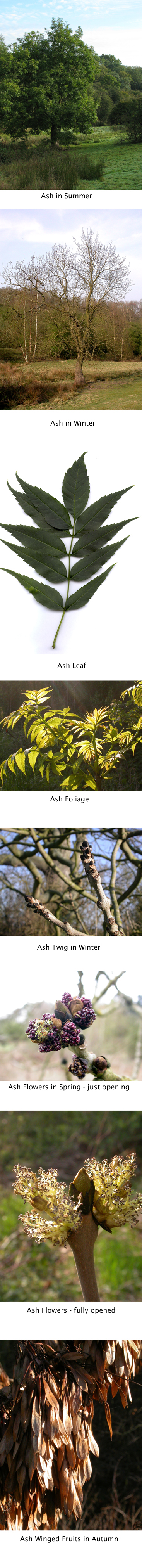 ash composite reduced